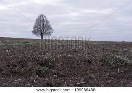 Early Frost Landscape