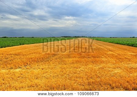 field at after harvest