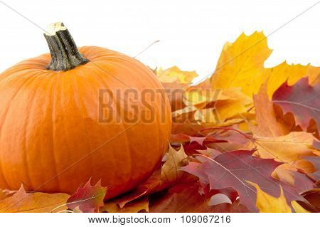 Decoration Of Pumpkin With Autumn Leaves For Thanksgiving Day On White