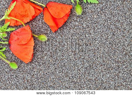 Poppy Flowers On The Poppy Grains Close Up Background