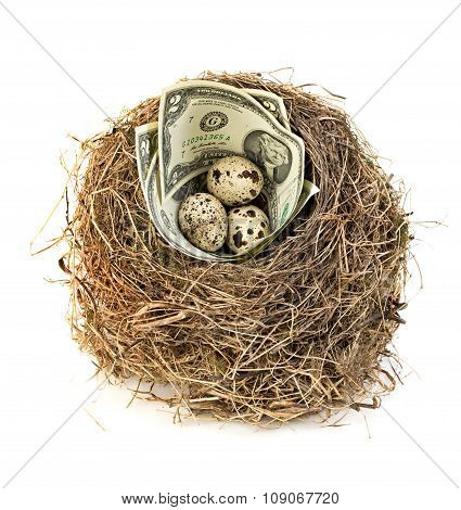 Original Bird's Nest With Dollar Bills And Quail Eggs . New Business Starting By Banknotes. Business