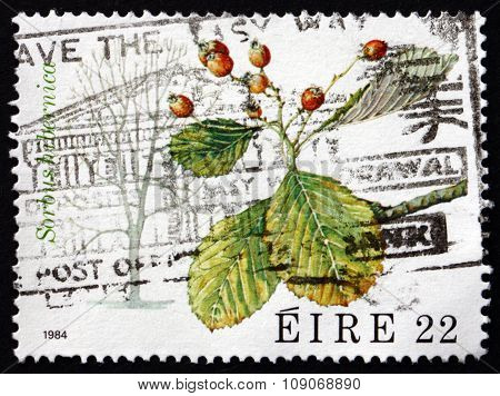 Postage Stamp Ireland 1984 Irish Whitebeam, Deciduous Tree