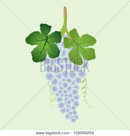 Bunch Of Blue Grapes With Leaves