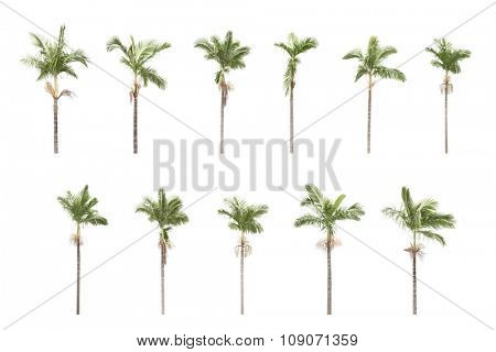 Panorama shoot for two group of palm trees isolated on white background in park.