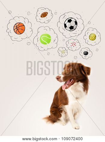 Cute brown and white border collie thinking about balls in a thought bubbles above his head