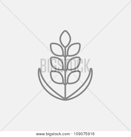 Wheat line icon for web, mobile and infographics. Vector dark grey icon isolated on light grey background.