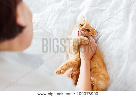 Ginger Cat Bites Woman's Hand. The Fluffy Pet Plays With Woman On White Bed. Cute Cozy Background