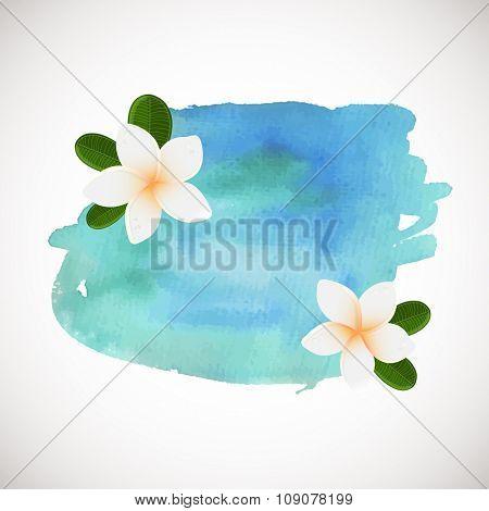 Vector white frangipani flowers. Plumeria flower on blue watercolor background