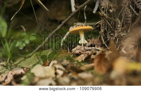 Beautiful mushroom on grass forest covered by some leafs