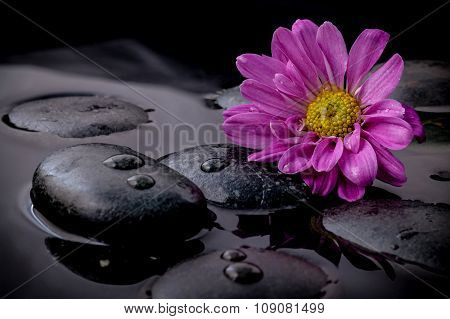 The Flower On River Stones Spa Treatment Scene On Black Background Zen Like Concepts.