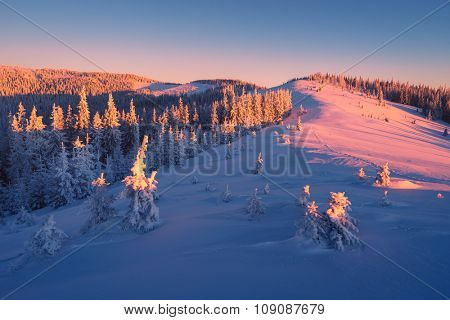 Winter landscape. Beautiful sunrise in the mountains. Spruce forest in the hills. Carpathians, Ukraine, Europe