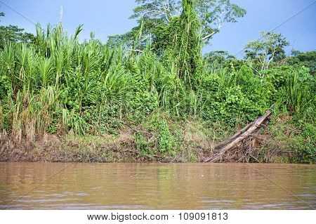 Amazon River Outside