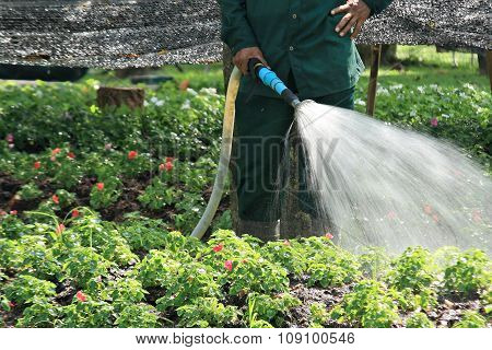 Worker Watering Flower