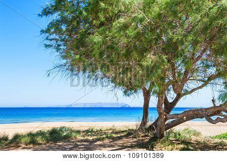 Trees On The Wild Tropical Beach