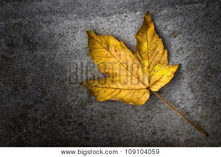 Yellow Leaf Isolated