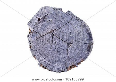 Old Tree annual ring circle wood (Die cutting)