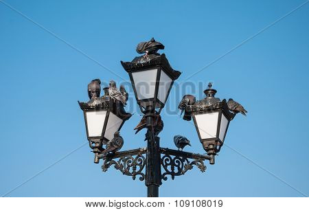 Pigeons on lamp