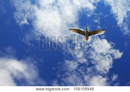 Seagull with blue sky