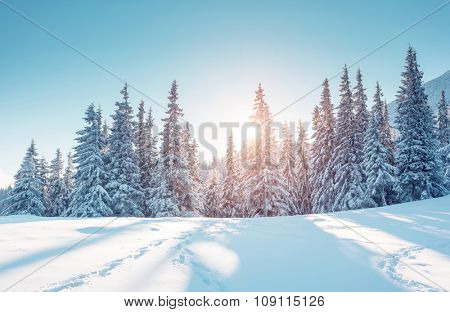 Majestic winter landscape glowing by sunlight in the morning. Dramatic wintry scene. Location Carpathian, Ukraine, Europe. Beauty world. Retro and vintage style, soft filter. Instagram toning effect.