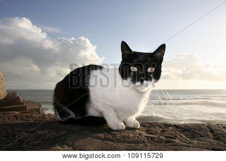 Sunny Stray Cat, Cadiz