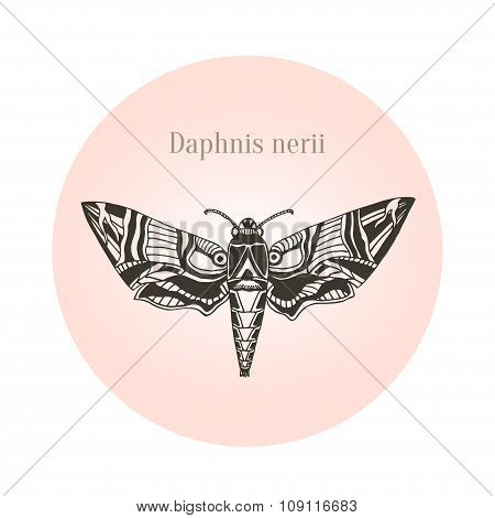Oleander hawk moth tattoo art. Daphnis nerii. Vector illustration.