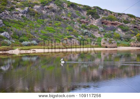 Pelican and Reflections: Moore River, Western Australia