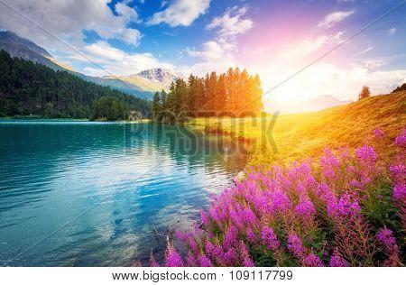 Fantastic azure alpine lake Champfer. Unusual and picturesque scene. Location famous resort Silvaplana village, district of Maloja in the Swiss canton of Graubunden, Alps. Europe. Beauty world.