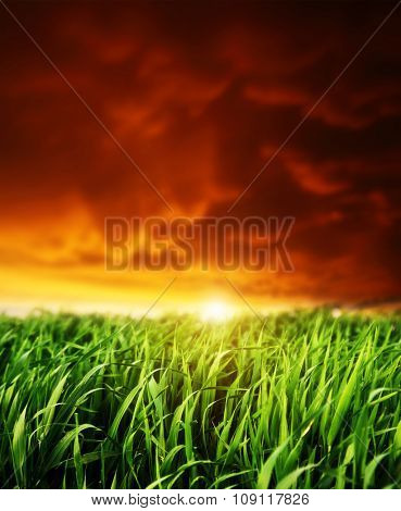 Fantastic field glowing by sunlight. Red overcast sky with sunny beams. Dramatic and picturesque scene. Location Ukraine, Europe. Beauty world. Instagram toning. Warm toning effect.