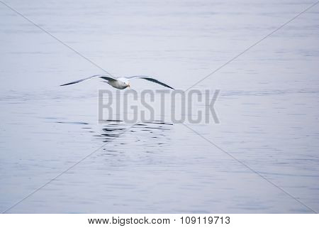 Seagull on the sea background. closeup