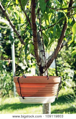 Empty Ceramic Flowerpot Is Hanging On The Tree, Gardening Theme