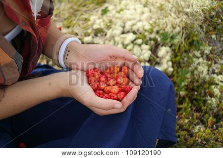 Berries in the women's hands at nature