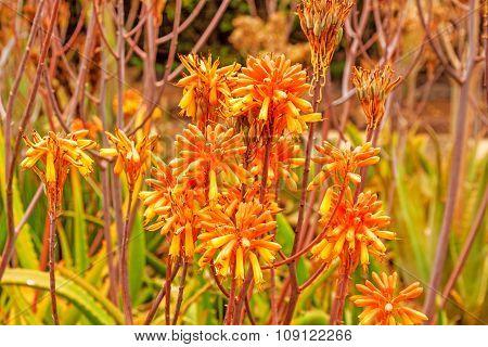 Colorful Cactus Blossom