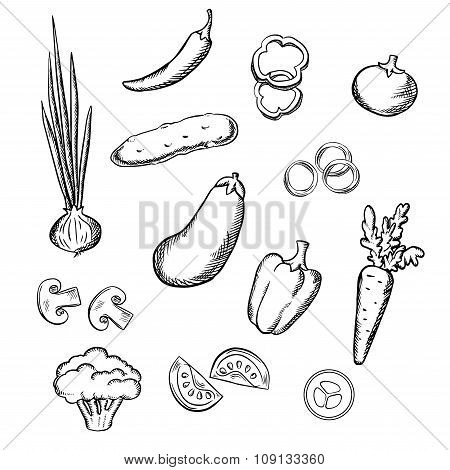 Sketch of fresh whole and sliced vegetables