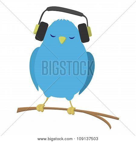 Blue bird listening to music