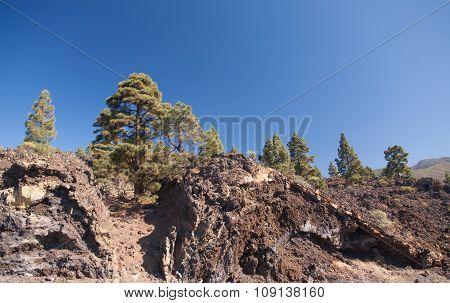 Teide Tenerife Canarian Volcano Landscapes