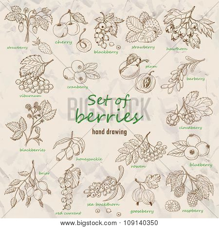 Collection Of Garden And Wild Berries