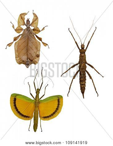 set of stick insects isolated on white background