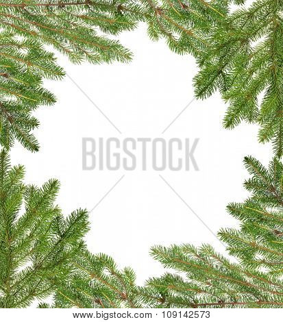 frame from green fir branches isolated on white background