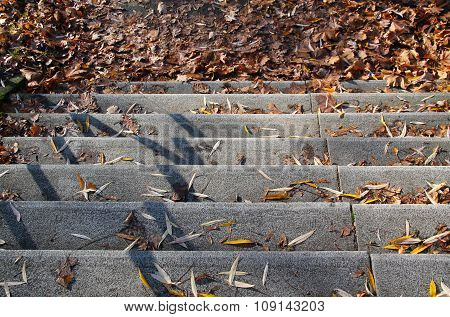 stairs with fallen leaves