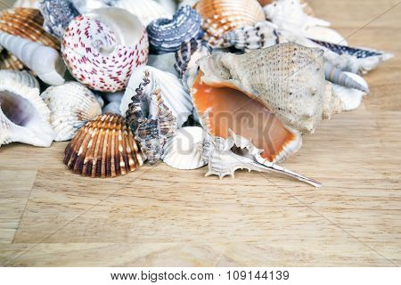 Different seashells piled together like a background.