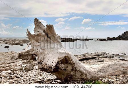 Tree Truck Driven On Shore