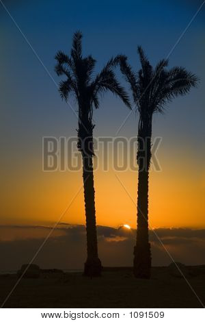 Sunset In Oasis. Egypt, Africa