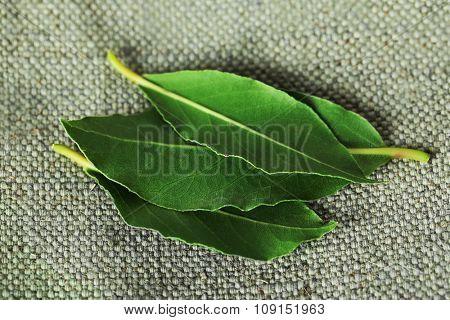 Fresh bay leaves, close up
