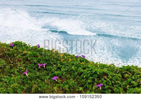 beautiful flowers on the shore of the Pacific Ocean