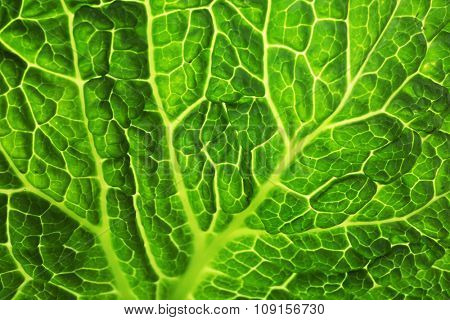 Leaf of savoy cabbage background, macro