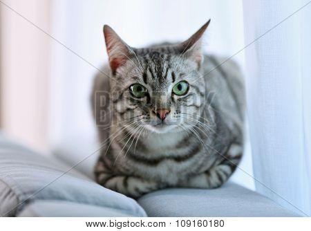 Beautiful cat near window close-up