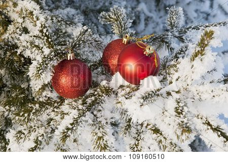 Red Christmas ball on a fir . snowy forest.