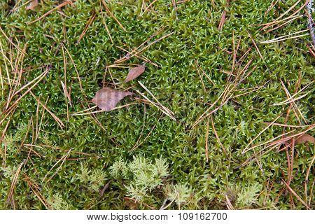 Green mossy soil