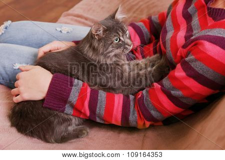 Beautiful grey cat sleeping on sofa near woman