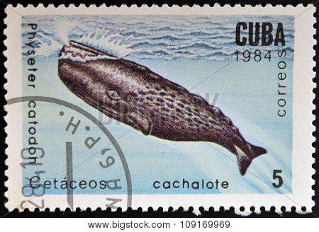 CUBA - CIRCA 1984: stamp printed in Cuba shows Cachalot Physeter catodon circa 1984